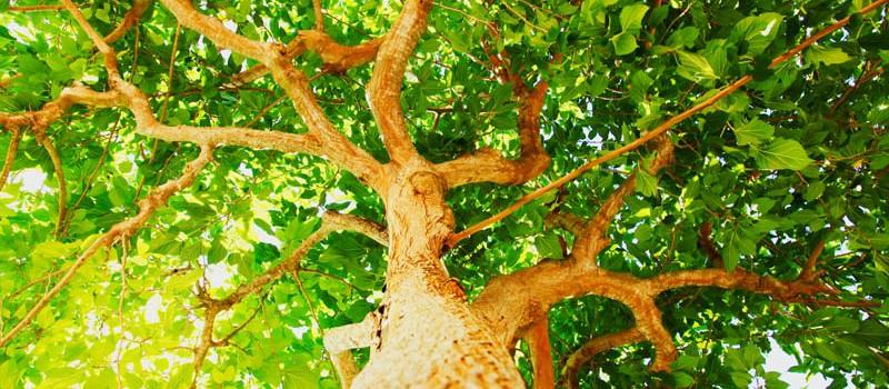 Naturaleza_verde1